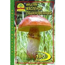 Купить МИЦЕЛИЙ ЗЕРНОВОЙ МАСЛЕНОК ОБЫКНОВЕННЫЙ, 10 Г