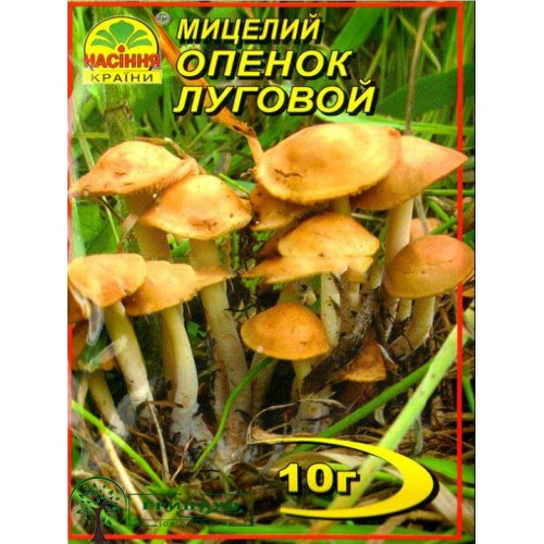 Купить МИЦЕЛИЙ ЗЕРНОВОЙ ОПЕНОК ЛУГОВОЙ, 10 Г