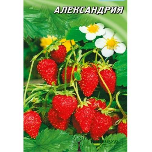 """СЕМЕНА ЗЕМЛЯНИКА """"АЛЕКСАНДРИЯ"""", 100 ШТ. /ГЕЛИОС/"""