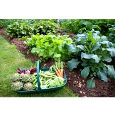 Когда что сеять и сажать на огороде?