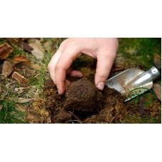 Мицелий грибов - трюфель черный и белый - уже в продаже ТД ГРИНВУД